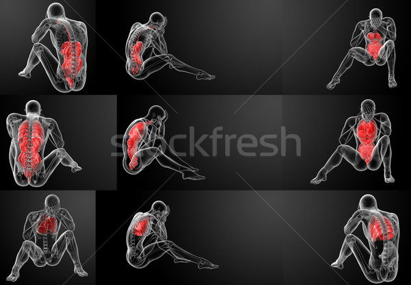 3D rendering human digestive system and respiratory system  Stock photo © maya2008
