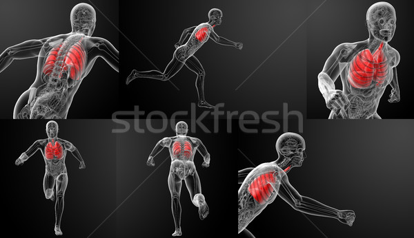 3d render human respiratory system in x-ray Stock photo © maya2008