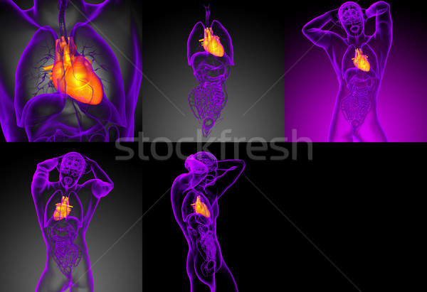 3d rendering medical illustration of the human heart  Stock photo © maya2008