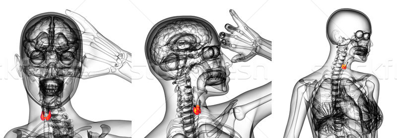 3d rendering illustration of the  thyroid gland Stock photo © maya2008