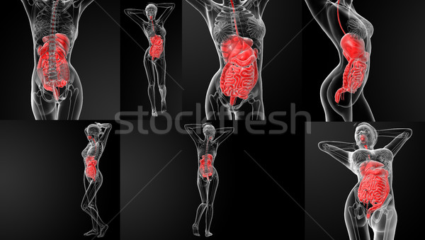 3D rendering illustration of the digestive system Stock photo © maya2008