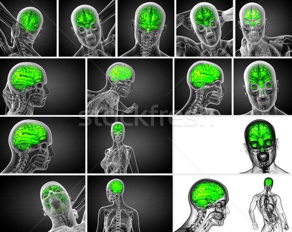 3D medycznych ilustracja mózgu widok z tyłu Zdjęcia stock © maya2008