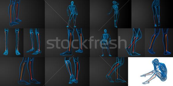 3d rendering illustration of the fibula bone  Stock photo © maya2008
