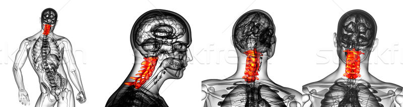 3d rendering medical illustration of the cervical spine Stock photo © maya2008