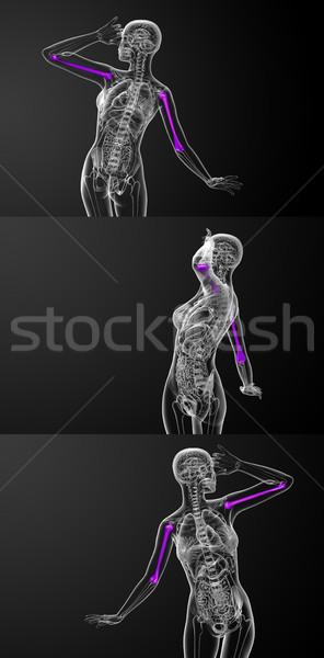3d rendering medical illustration of the humerus bone Stock photo © maya2008