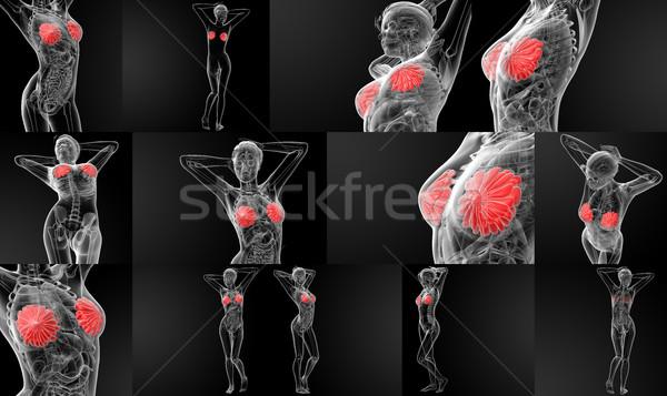 3D rendering female breast anatomy x-ray Stock photo © maya2008