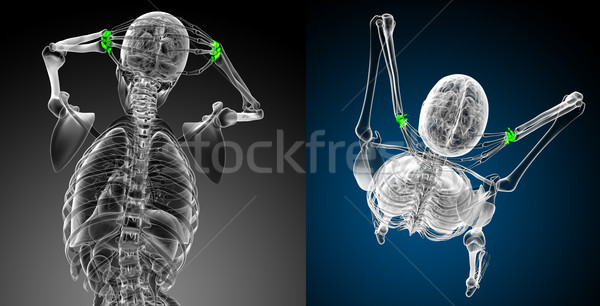 3D медицинской иллюстрация кость Сток-фото © maya2008