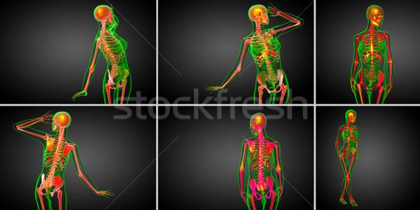 3D médico ilustração esqueleto osso Foto stock © maya2008