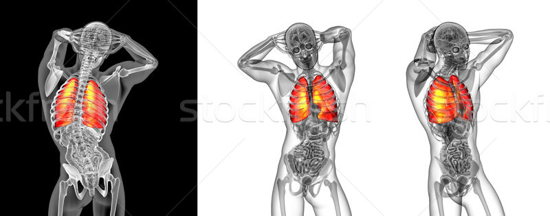 3d rendering illustration of the human lung Stock photo © maya2008