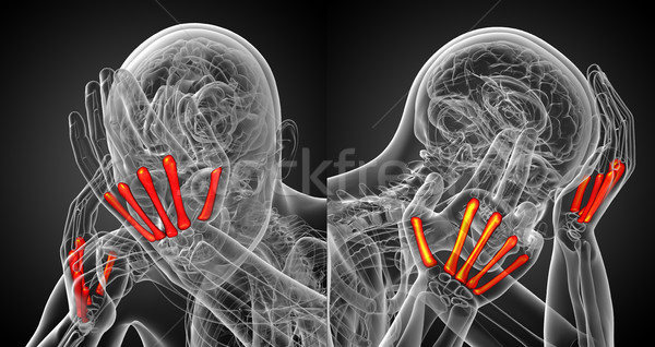 3d rendering medical illustration of the metacarpal bone Stock photo © maya2008