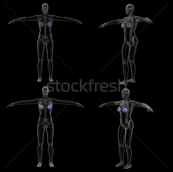 3d rendering medical illustration of the human mammary gland Stock photo © maya2008