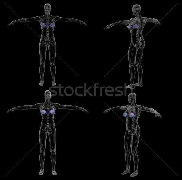 3D medici illustrazione umani ghiandola Foto d'archivio © maya2008
