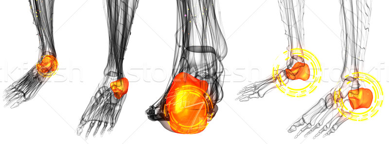 3d render illustration of the Human Foot Joint Pains  Stock photo © maya2008