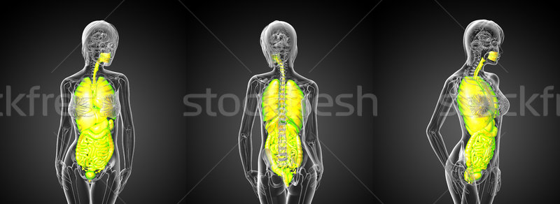 3d rendering medical illustration of the digestive system and re Stock photo © maya2008