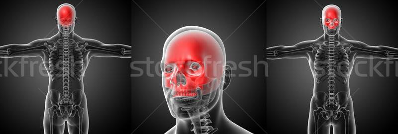 Stockfoto: 3D · medische · illustratie · schedel