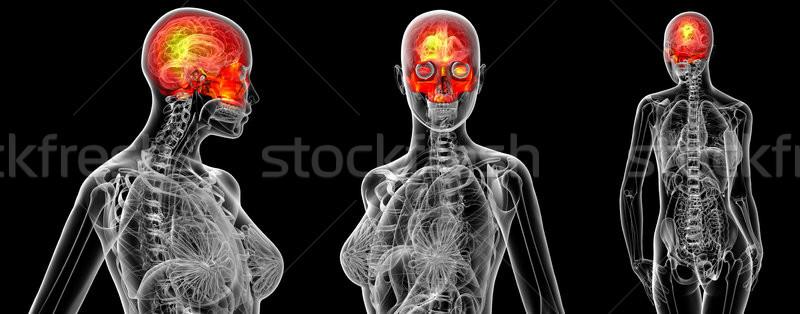 3D médico ilustração humanismo crânio Foto stock © maya2008