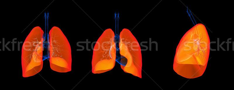 Rendering 3d illustrazione polmone medicina umani petto Foto d'archivio © maya2008