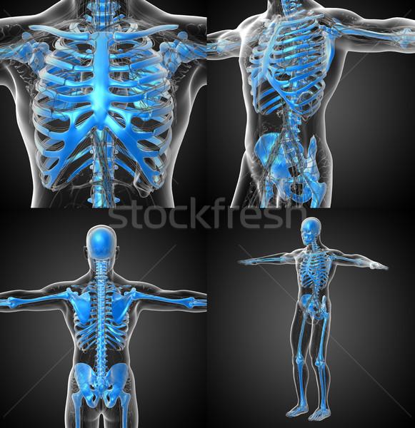 3D médico ilustração humanismo esqueleto Foto stock © maya2008