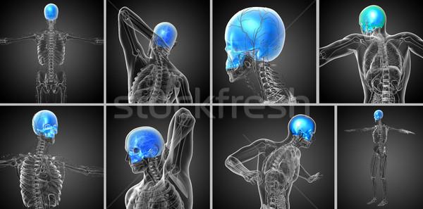 3D tıbbi örnek kafatası Stok fotoğraf © maya2008