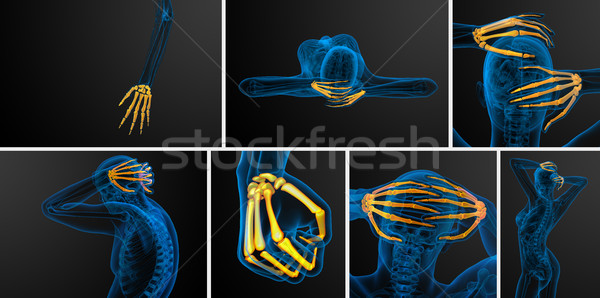 3D illustratie skelet hand Stockfoto © maya2008