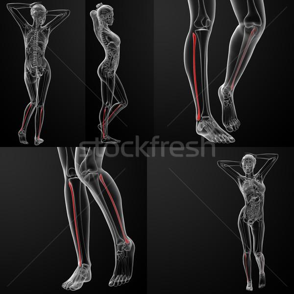 3D illustrazione femminile ossa medici Foto d'archivio © maya2008