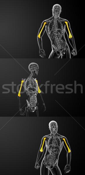Stock photo: 3d rendering medical illustration of the humerus bone