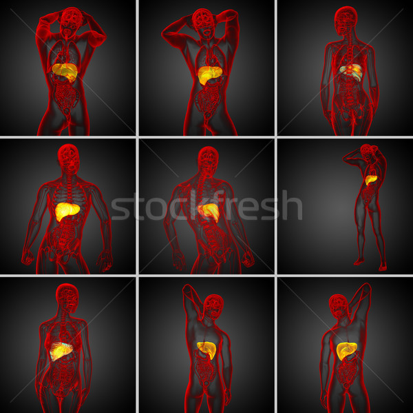 3d rendering medical illustration of the liver Stock photo © maya2008