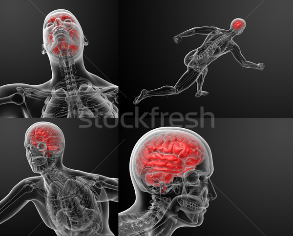 3d render illustration of human brain X ray Stock photo © maya2008