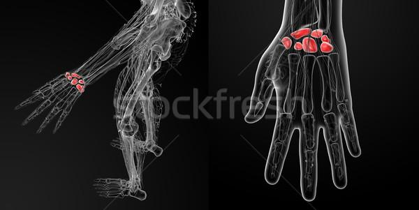 3D örnek insan kemikleri el Stok fotoğraf © maya2008