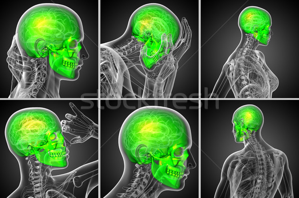 3d rendering  medical illustration of the skull  Stock photo © maya2008