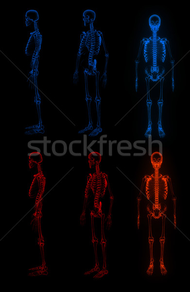 3D レンダリング スケルトン 黒 ボディ 科学 ストックフォト © maya2008
