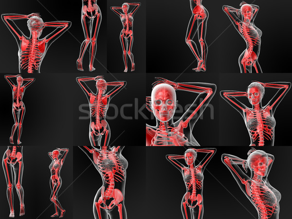 3D médico esqueleto ciência gráfico Foto stock © maya2008