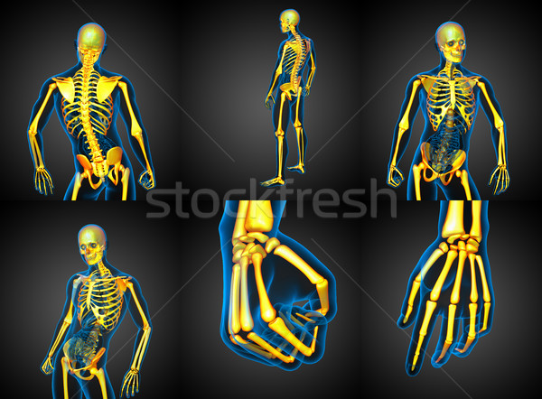 3D rendering medical illustration of the human skeleton Stock photo © maya2008