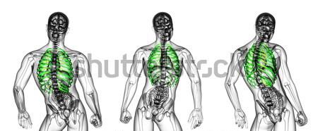 3d rendering medical illustration of the  adrenal  pain Stock photo © maya2008