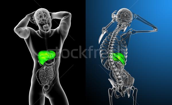 3d rendering medical illustration of the liver  Stock photo © maya2008