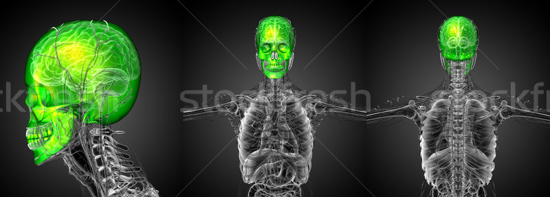 3d rendering medical illustration of the human skull  Stock photo © maya2008