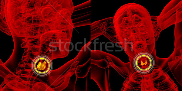 3d rendering medical illustration of the thyroid gland  Stock photo © maya2008