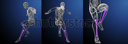Stok fotoğraf: 3D · tıbbi · örnek · kemik