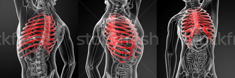 3D illustratie rib kooi medische Stockfoto © maya2008