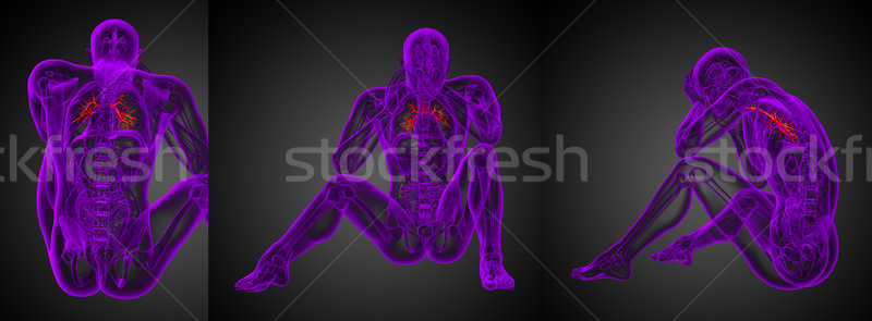 3D rendering medical illustration of the male bronchi  Stock photo © maya2008