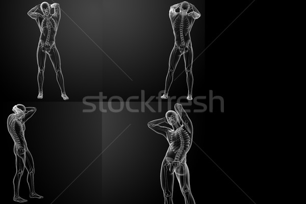3D rendering of the  skeletal Stock photo © maya2008