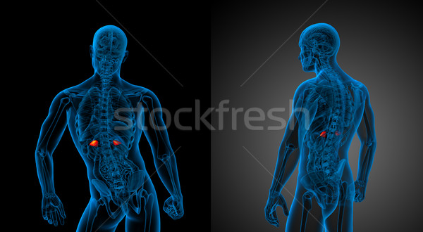 3D медицинской иллюстрация Сток-фото © maya2008