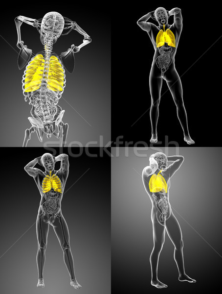 3d rendering illustration of the respiratory system Stock photo © maya2008