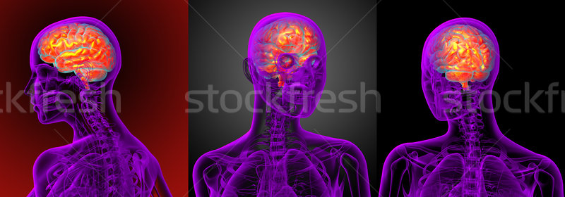 3d rendering medical illustration of the brain  Stock photo © maya2008