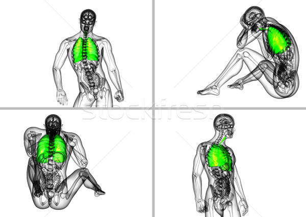 3d rendering medical illustration of the human respiratory syste Stock photo © maya2008