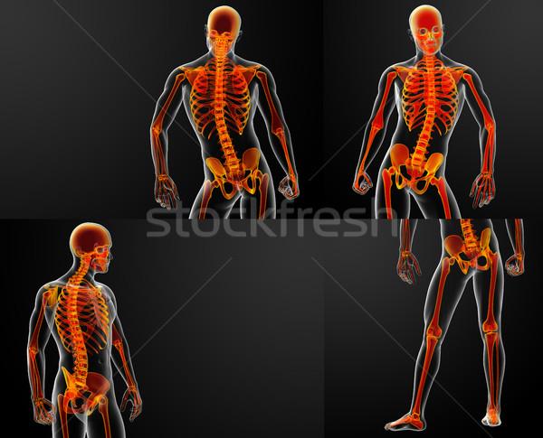 3D kırmızı iskelet bilim kas Stok fotoğraf © maya2008