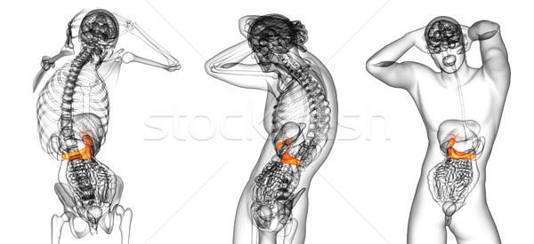 3d rendering medical illustration of the gallblader and pancreas Stock photo © maya2008