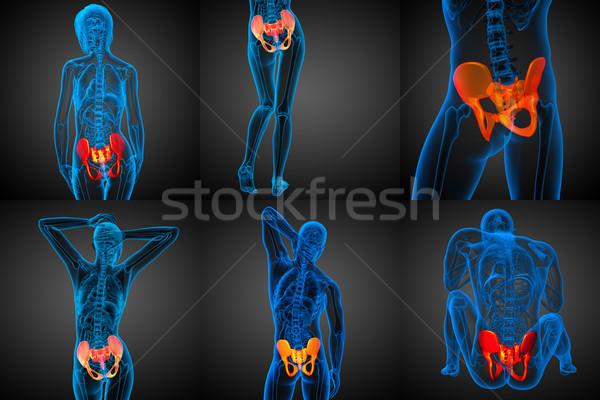 3D medici illustrazione ossa Foto d'archivio © maya2008