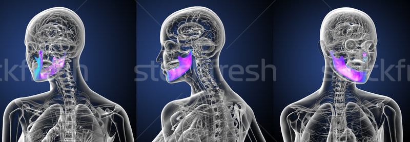 3d rendering medical illustration of the jaw bone Stock photo © maya2008