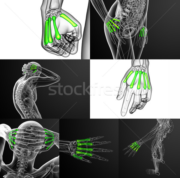3D médicaux illustration osseuse Photo stock © maya2008